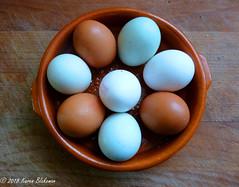 March 20th, 2018 Beechwood Farm free range eggs (karenblakeman) Tags: reading uk eggs blue white brown 2018 2018pad march beechwoodfarm freerange berkshire smileonsaturday eggcellent