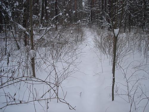 Заснеженный лес ©  ayampolsky