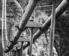 Indie. (Canad Adry) Tags: sony alpha e mount hybrid mirrorless vintage old manual manuel lens a6000 konica hexanon ar 135mm f32 noir et blanc black white line curve bridge pont cable indus