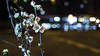 Olympus OM-System Zuiko MC Auto-w 2/28 - DSCF5765 (::nicolas ferrand simonnot::) Tags: olympus omsystem zuiko mc autow 28 mm f2 70s | 8 blades aperture om mount paris 2018 bokeh depth field color vintage manual classic japanese fixed length prime lens profondeur de champ flower close up macro yellow purpple extérieur wideopen wide open fleur night focus darkness spring light