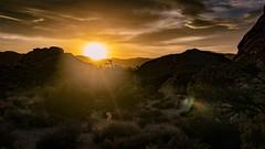 A Light in the Desert (J*Phillips) Tags: california sky sunlight sunset joshuatree desert