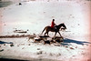 1a-242 (ndpa / s. lundeen, archivist) Tags: nick dewolf nickdewolf photographbynickdewolf 1977 1970s color 35mm film 1a reel1a aspen colorado fall autumn snow november rockymountains foxhunt hunt woodycreek woodycreekhounds roaringforkvalley equestrian horse horseback rider redjacket redcoat dogs hounds hat shadows roaringforkhunt roaringforkhounds