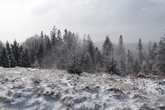 Wind in the field (mysthique_m) Tags: mountains winter freezy snow mist foggy woodland trees cloudy clouds frozen frost