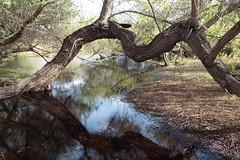 Branch (Kelson) Tags: madronamarsh marsh hike torrance california nature trees pond