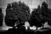 *** (Misha Sokolnikov) Tags: sanfrancisco cal ca california street running run nike blackandwhite streetphotography leica leicamonochrom leicamm 50mm aposummicron nikerunning sf sunset light trees shadow shadows