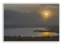 Morgenstund (Robbi Metz) Tags: deutschland germany bayern bavaria reischenau augsburgwestlichewälder landscape trees water pond sunrise fog colors canoneos