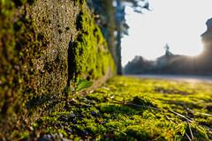 A bit of green in my life (Carandoom) Tags: geneva 2018 green sun close up