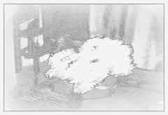 Rochefort Jonquilles 2018 (Rumskedi) Tags: rochefort jonquilleスイセン属 jonquille水仙 europa belgique belgië belgien europe欧洲 monde世界 jonquilles23032018
