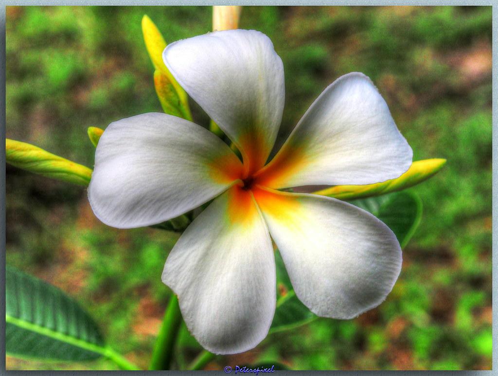 nam thai massage royal thai massage copenhagen