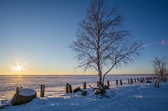 Joensuu - Finland (Sami Niemeläinen (instagram: santtujns)) Tags: joensuu suomi finland pyhäselkä kuhasalo pohjoiskarjala north carelia luonto nature sunset auringonlasku talvi winter lumi snow ice jää