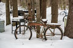 _DSC5007 Antique Bicycle (Charles Bonham) Tags: antique winter snow bicycle trees sonya7rll sonyfe2890mmmacrogoss charlesbonhamphotography picker americanpickers rust