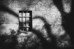 From the window (dono heneman) Tags: window fenêtre mur wall maison house nb noiretblanc blackwhite barreau bar volet flap ombre shadow lumière light mourèze hérault languedocroussillon occitanie france pentax pentaxart pentaxk3 village town