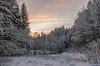 winter forest (Christian Birzer) Tags: bäume schnee baum landschaft kalt himmel rot orange sonnenuntergang eis wald wolken winter flora ice pflanzenwelt vegetation cloud clouds cold countryside floral forest icy landscape red sky snow sunset tree trees