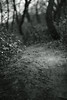 walking path (Amselchen) Tags: trail path plants bokeh blur dof depthoffield mono monochrome blackandwhite light shadow sony a7rii alpha7rm2 samyang 85mmf14 sonyilce7rm2