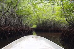mighty mangroves (astroboy_71) Tags: mangroves nature water plants bali lembongan island holiday travel