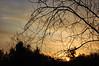 Trees And Sky. (dccradio) Tags: lumberton nc northcarolina robesoncounty sunrise risingsun saturday saturdaymorning morning goodmorning nature natural outdoors outside tree trees sky clouds morninglight nikon d40 dslr branches sticks treebranch treebranches treelimbs