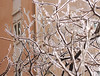 frozen branches (ludi_ste) Tags: ice icy frozen branches city cold genoa genova front frontage whiteandpink winter march