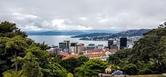 Wellington depuis le jardin botanique