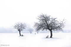 Silence (Olmux82) Tags: snow landscape city mist white nikon d750 fog paesaggio reggio emilia reggia di rivalta rimagna parco alone silence