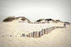 Tocar es dignidad del viento (Helena de Riquer) Tags: praiadoareão vagosaveiro aveiro portugal beach platja sorra sand flickr helenaderiquer nationalgeographic lonelyplanet 2017 sony sonydsch20 carlzeiss europa europe