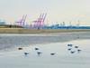 Crosby (tubblesnap) Tags: crosby merseyside beach fuji xs1 anthony gormley another place public art installation wind turbine statue crane gulls