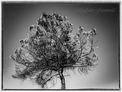 ...smiling tree (Manfreds.Fotoworld) Tags: smile sorriso lachen baum tree natur weiss schwarz nero bianco white black