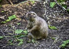 Bronx zoo 2017 (jsleighton) Tags: animal zoo bronx