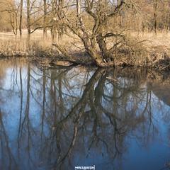 Bolle di Magadino, il classico (MarcoAgustoniPhotography) Tags: blu bolle di magazzino ticino fiume lago riflessi alberi tronchi specchio