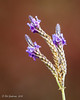 Spring (Bob Gunderson) Tags: california flowers fortmason northerncalifornia sanfrancisco