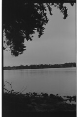 P55-2017-023 (lianefinch) Tags: blackandwhite blackwhite noirblanc noiretblanc argentique argentic analogique monochrome bretagne morbihan paysage landscape mer sea golfe nature ocean arbre tree eau water
