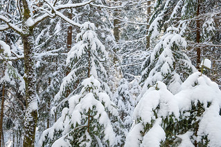 Winterwald im Werdenfelser Land