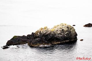 Starling Rock