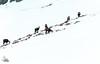 Snowhiking Grindelwald First - Bort (Ukelens) Tags: swiss ukelens bern schweiz switzerland suisse svizzera lightroom light lights lighteffects lighteffect lightshow shadow shadows snow wandern hiking snowfall snowhiking schneewandern grindelwald first bachalpsee waldspitz berge mountains schnee landschaft landscape gämse chamois