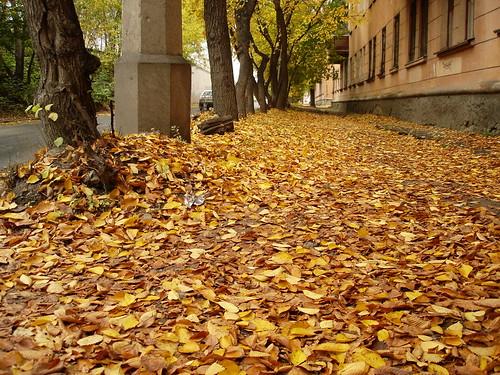 Осенние листья ©  ayampolsky