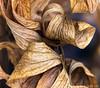 Backyard Swirls (James Neeley) Tags: macro nature abstract jamesneeley
