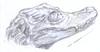 cocodrilo a lapiz (ivanutrera) Tags: cocodrilo cocodrile draw dibujo drawing dibujoalápiz sketch sketching lapiz pencil wild wildlife anfibio reptil