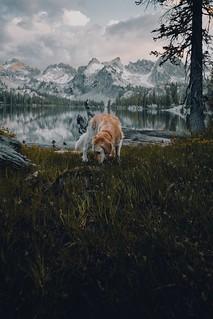 sawtooth explorer