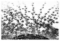 Departures and arrivals (leo.roos) Tags: tracks sporen ijs ice frozen snow sneeuw winter westland wollebrand a7rii meyerprimoplan5819 exakta 1954 darosa leoroos dayprime day58 dayprime2018 dyxum challenge prime primes lens lenzen brandpuntsafstand focallength fl
