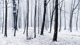 Stark Wood