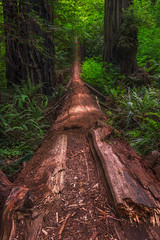 Fallen Comrade (Smi77y_OG) Tags: landscape forest oregon california redwoods pacificnorthwest coast trees green color perspective focusstack
