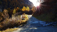 Photons (Matt_étranger) Tags: anniviers zinal grimentz larch larici larice autunno autumn herbst yellow color mountain nature wild besso couronne imperiale weisshorn landscape montagna trekking hiking alps swiss svizzera alpi wallis vallese colori alberi