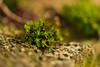 Moss (pstenzel71) Tags: moos natur pflanzen darktable bokeh samsungnx moss stone stein
