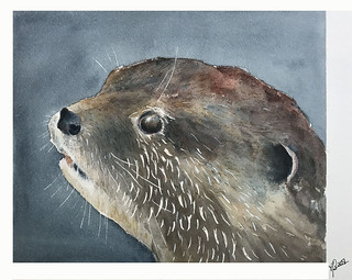 Loutre  (Otter) 2018