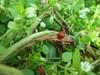 100_8854 (jeanchristophelenglet) Tags: cergyfrance fleur flower flor coccinelle ladybug joaninha