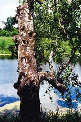 Bolshie vyazemy (verinenprinssi) Tags: film filmphotography russia river bolshievyazemy manor birch