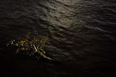 A minimalistic scene (aryn.zero) Tags: branches branch water minimalism minimalistic black green