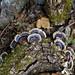 Roches noires_ champignons