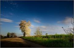 Tree Zdenek Mahler (piontrhouseselski) Tags: cz south moravia tree sky blue