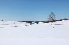 Grodzisko Dolina 2 [5] IMG_0271 b (david.neville2776) Tags: grodzisko podkarpackie snow snieg valley dolina tree drzewo
