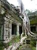 Nature Wins (Toats Master) Tags: angkorwat cambodia nature ruins temples trees roots history jungle
